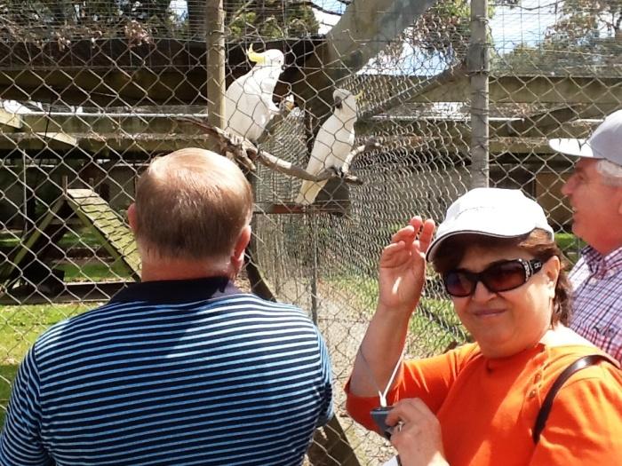 papagali albi