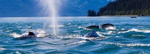 Alaska juneau-133872