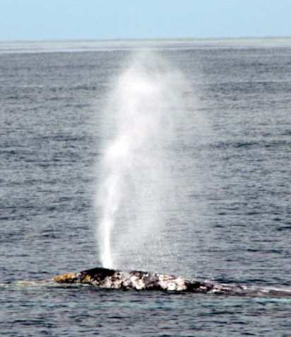 whale jet