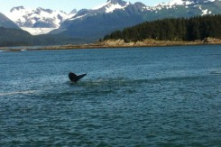whale jet2