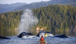 whale părivat caiac