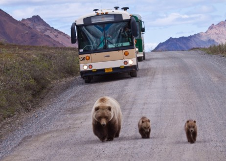 00billiehyde_bears_and_buses