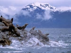 Alaska Foci