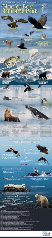 Alaska glacier-bay-national-park-animals