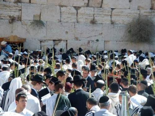 sukkotkotel zidul plangerii Israel