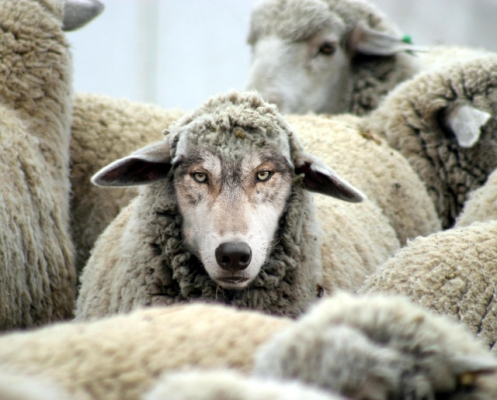 sursa ethan-vanderbuilt-a-wolf-in-sheeps-clothing